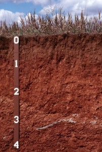 Soil profile grass surface