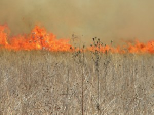 AgBlog.Fire and dead grass.Kathy Larson and Joe Coffey.The Cayenne Room.Oregon (1)